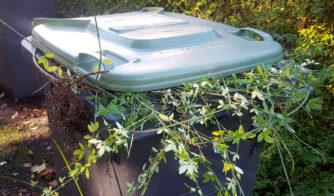 Green wheelie bin with garden waste