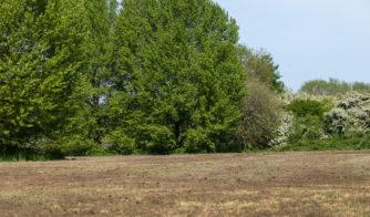 Wincheap Water Meadows